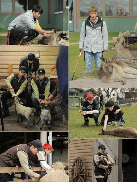 「2PM」、オーストラリアで動物と触れ合うスチール公開