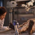 <KBS World>ハン・ウンジョン主演。ミステリーファンタジー! 「400年の夢」全話一挙放送
