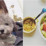 <トレンドブログ>「少女時代」テヨン、愛犬ゼロくんのご飯を食べちゃった!?