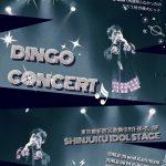 DINGO、ソロコンサート開催