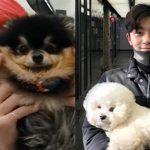 """防弾少年団(BTS)Vとパク・ソジュンの友情を続けさせる伴侶犬タニとシムバ""""かわいすぎる"""""""