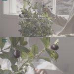 <トレンドブログ>「JBJ95」高田健太&キム・サンギュンがミニアルバム「AWAKE」で春の雰囲気を伝える!