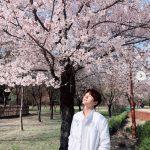 """INFINITEエル、桜にも負けない""""花美男""""写真でファンを魅了"""