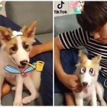 俳優ソンフン、保護犬「ヤンヒ」に愛情爆発…「ずっと一緒に」