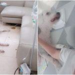 キム・ウォニ、14年間を共にした愛犬の死…応援の声殺到