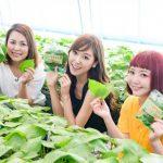 【情報】人気インスタグラマーが、 K-FOOD(ゆず茶、えごま、チャメ、干し柿)の生産地を訪問!