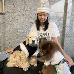 ジェニー(BLACKPINK)、韓服を着た愛犬たちと新年の挨拶