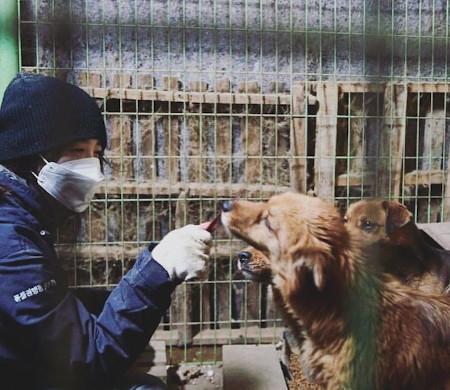 女優ク・ヘソン、動物保護所に飼料1トンを寄付、「天使たちに新しい人生を」