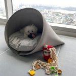"""チャンミン(東方神起)、""""漢江ビュー""""の自宅公開 「愛犬が僕の通帳を…」"""
