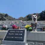 ジミン(AOA)、天国の父親に会いに… 墓前で「会いたい…」