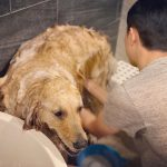 CNBLUEイ・ジョンシン、ほのぼのとした日常…慣れた手つきで愛犬のシャワー