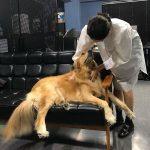 女優シン・ミナ、大型犬とじゃれ合う姿もラブリーな日常