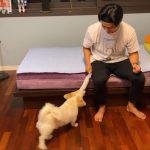 2PMテギョン、愛犬と遊ぶ楽しい日常…愛情にあふれた笑顔(動画あり)