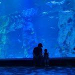 【トピック】女優チャ・イェリョン、夫チュ・サンウクと娘との水族館での様子を公開