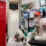 2PM Jun.K、愛犬と共にした和やかな日常公開…オレンジ色の帽子をかぶった可愛い犬は?