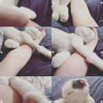 俳優アン・ジェヒョン、愛猫と共に眠る日常…先月にク・ヘソンと離婚成立