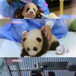 """BLACKPINK、中国の猛非難に""""パンダ飼育係体験映像の公開を保留に"""""""
