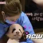 「BLACKPINKが手袋をせずパンダに触った」…中国のインターネットユーザーらによる言い争い